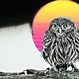 owl sun freetoedit