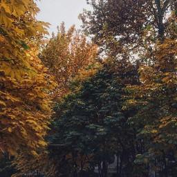 freetoedita autumn nature