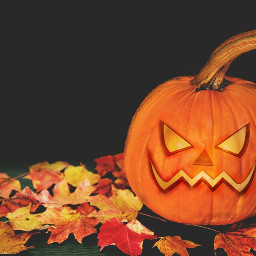 freetoedit halloween irctheperfectpumpkin theperfectpumpkin