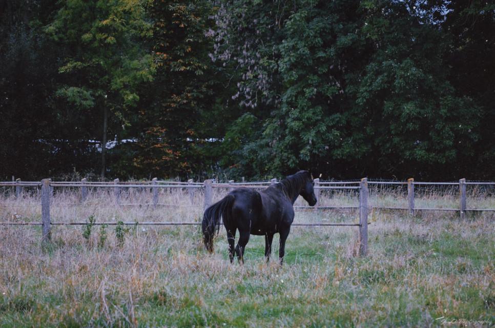 Black beauty #photography #horse #beauty #nature #autumn #freetoedit #animal