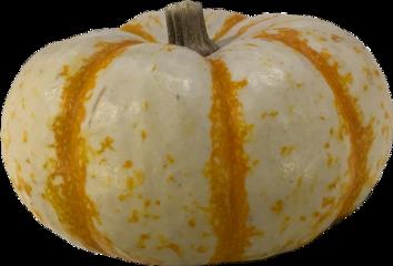 aesthetic fall pumpkin freetoedit