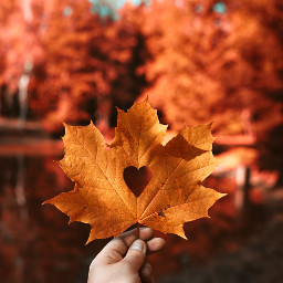 fall autumn leaves leaf nature freetoedit