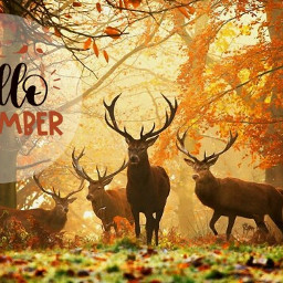freetoedit autumn november hellonovember srchellonovember