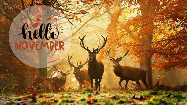 #freetoedit #autumn #november #hellonovember