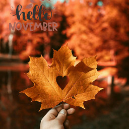 freetoedit november november2018 carpediem forest srchellonovember