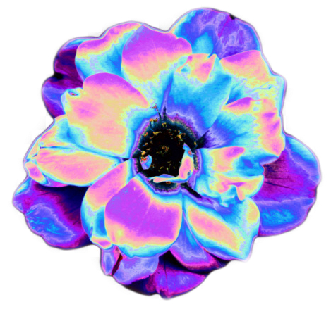 #psychedelic #flower #aesthetic #aestheticedit