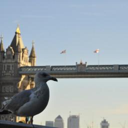 glitchbrush bird towerbridge london myphoto freetoedit