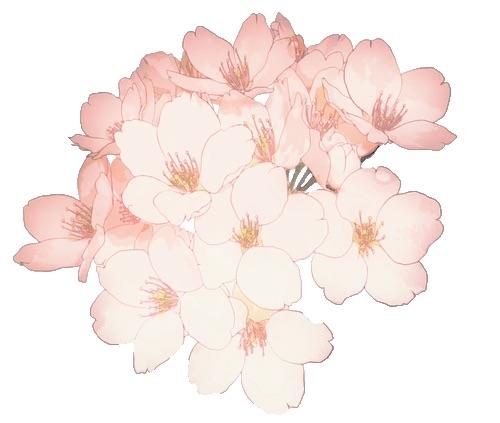 #freetoedit #overlay#editingneed#text#texture#black#white#flower
