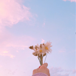 myphotography pcadayinmylife adayinmylife pcbeautifuldays pcfromwhereistand pchappyday pcdaylight pcflowerinhand pcspringishere pcmorninginmycity pcflowersnearyou flowersnearyou