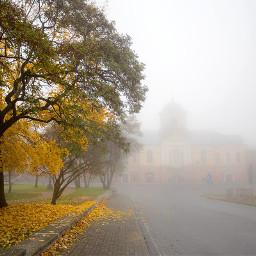 trees fog town