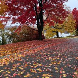 freetoedit leaves autumncolors path trees