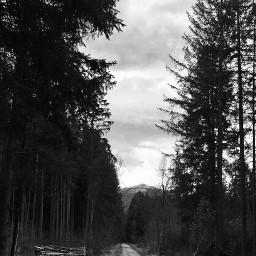 blackandwhite landscape nature photography monochromephotography pctree pcforest
