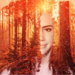 freetoedit forest trees warmth artisticselfie