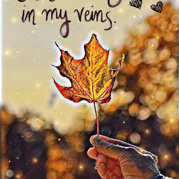 ircautumnleaf autumnleaf autumnfeels vibes follow4follow freetoedit