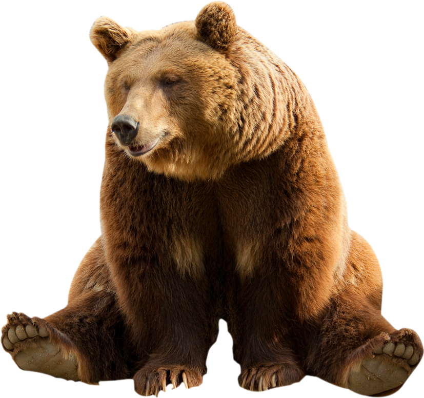 #bear #png #freetoedit