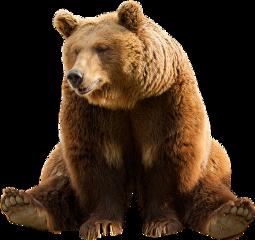 freetoedit bear png