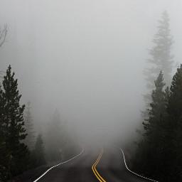 freetoedit road forest fog foggy