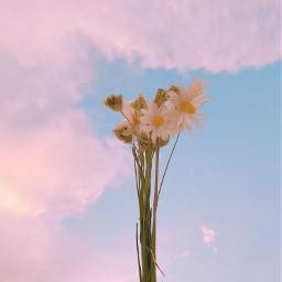 myphotography freetoedit pcspringishere pcflowersnearyou flowersnearyou