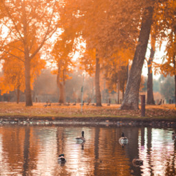 pcbeautifuldays beautifuldays freetoedit fall autumn