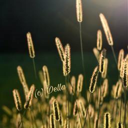 pcbeautifuldays beautifuldays pccontrasts contrasts freetoedit pcdaylight daylight pcfields