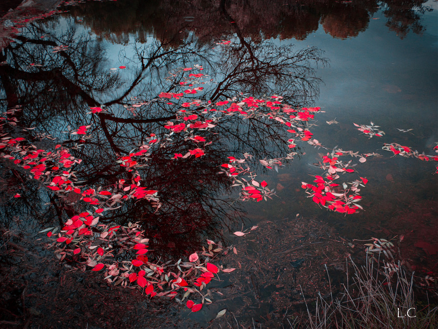 #autumn #fall #lake #trees #outdoors #red #leaves #forest #fall
