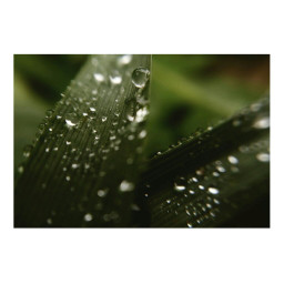 grass dew water drops waterdrops