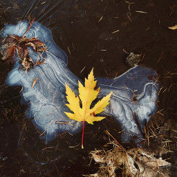 autumnleaves coldseason winteriscoming