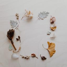 thanksgiving minimal minimalism background fall freetoedit