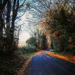 onmyway walk novembermood nopeople foliage