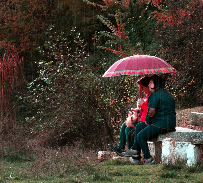 #park #forest #women #people #rain #umbrella #autumn #outdoors
