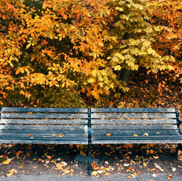 freetoedit have bench leaves autumn