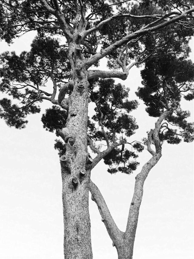 #freetoedit #blackandwhite #nature #tree #autumn #minimalism