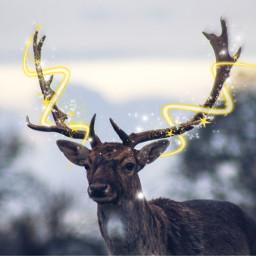 freetoedit christmas reindeer deer nature