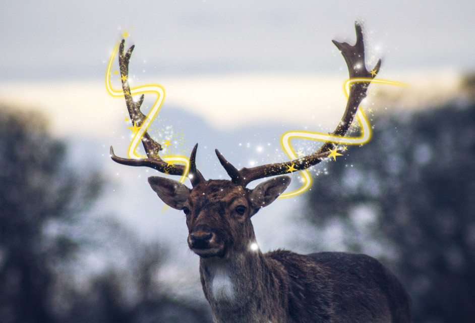 #freetoedit #christmas #reindeer #deer #nature #animal #sunrise #winter #christmastime #rudolphtherednosedreindeer #rudolph #art #edit #remixit #remix #mothernature #view #naturephotography