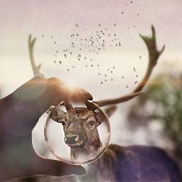 freetoedit interesting deerfilter photography summer
