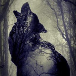 fox forrest fxeffects lomoeffect madewithpicsart freetoedit