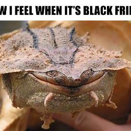 tgifmeme tgif meme funny friday freetoedit