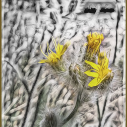 yellowflowers blackandwhite oilpaintingeffect nature