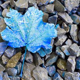 myphotography myedit blue leaf interesting
