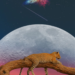freetoedit nebula leopard nightsky moon