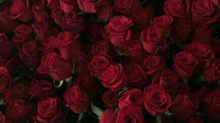 Background Aesthetic Rose Flower Red Wallpaper
