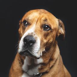dog dogs animal pet pets freetoedit