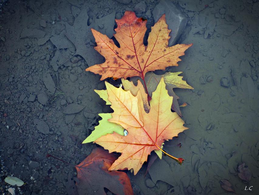#rain #water #foliage #autumn #nature #fall #autumncolors