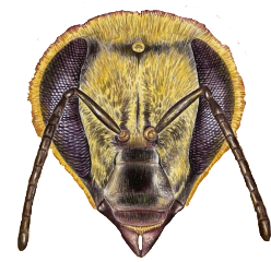 freetoedit sticker bee bumblebee yellow