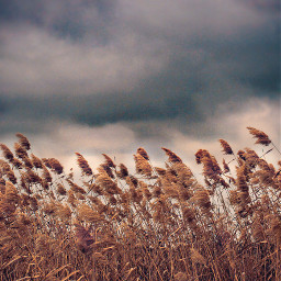 freetoedit nature autumnweather wildplantswavinginthewind darkclouds