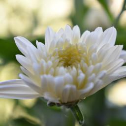 pccolorwhite colorwhite floral beautyofnature nature pcwhite