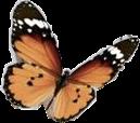 butterfly mayahsstickers freetoedit