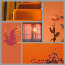 orange orangeaesthetic aesthetic lightaesthetic aestheticedit freetoedit