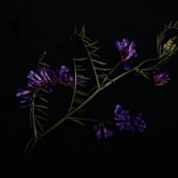 freetoedit plant vegetation photography autumn