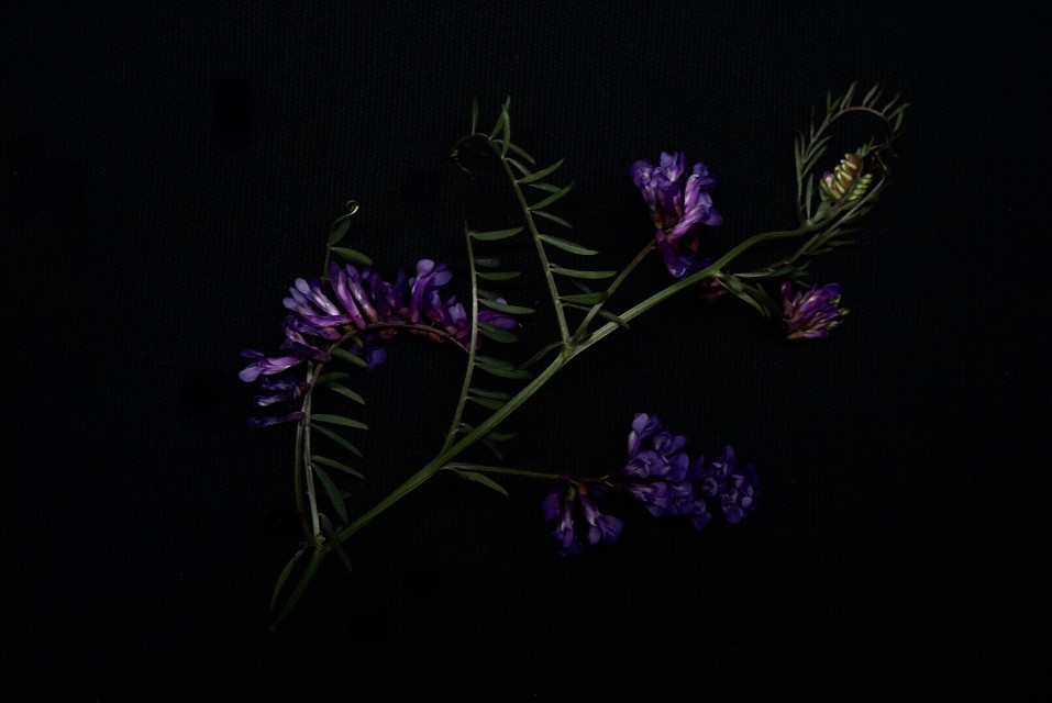 #freetoedit #plant#vegetation#photography #autumn